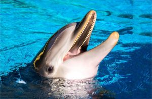 dolphin swimming experience