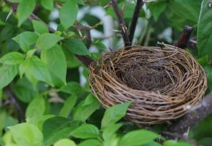 Finding Yourself After The Empty Nest