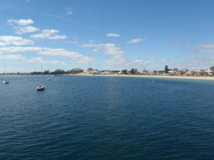 Rockingham - Australia dolphin swimming