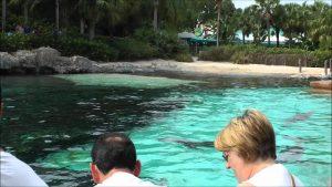 Sea World's Dolphin Cove