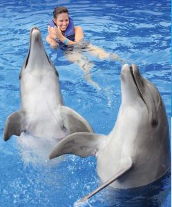 The 8 Best Destinations Worldwide For Swimming with Dolphins