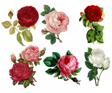 Flowers Associated With Masculinity